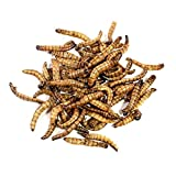 Edible Super Worms Real Edible Insects