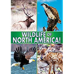 Wildlife Of North America!