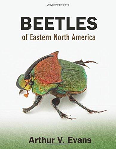 Beetles of Eastern North America PDF