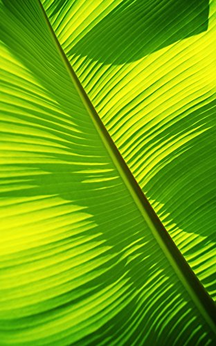 Close-Up Of Bright Green Banana Leaf Pattern Forms Off The Main Rib Poster Print (22 x 36)