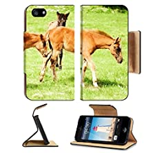 buy Apple Iphone 5 Iphone 5S Flip Case Foal Horse Image 20607670 By Msd Customized Premium Deluxe Pu Leather Generation Accessories Hd Wifi Luxury Protector