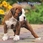 Boxer Puppies Calendar - 2016 Wall ca...