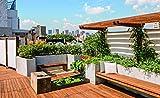 Image de Über den Dächern- Die schönsten Gärten und Terrassen