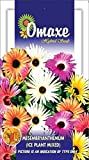 Ice Plant mesembryanthemum 100 seeds pack by Omaxe