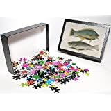 Photo Jigsaw Puzzle of Halicoeres radiatus, puddingwife a Atractoscion nobilis, kin from Mary Evans Picture Library...