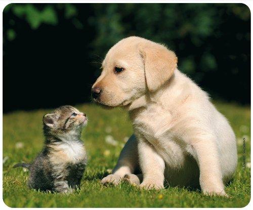 migliori-amici-gatto-con-motivo-cani-cucciolo-di-108-animali-mousepad-cartolina-qualita-tappetino-pe
