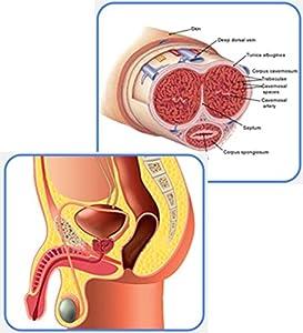 Wmall Men Male Penis Vacuum Pump Air Enlargement Enlarger Extender Enhancer Prolong