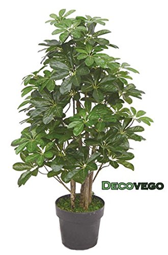 Schefflera arboricola pianta albero artificiale plastica - Pianta schefflera ...