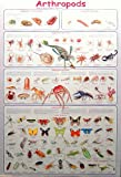 (24x36) Arthropods Insects Educational Science Chart Poster