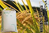 【新米 平成28年度 静岡コシヒカリ 玄米】自然豊かな山間で育った完全無農薬米 (30kg)