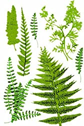 Martha Stewart Crafts Stickers, Fern