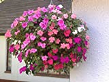 Plantopia 14 Inch Diameter Stone Plastic Multi-Plant Decorative Hanging Flower Pot / Basket