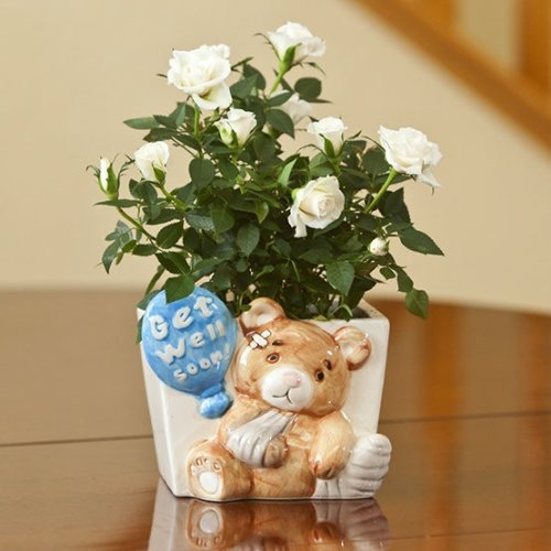 Get Well Gift - Teddy Bear Container -Ships Empty