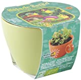 Radis Et Capucine Cress Seeds to Sow in Green Ceramic Pot