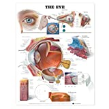 img - for The Eye Anatomical Chart book / textbook / text book