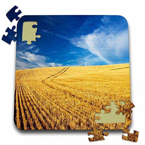 Danita Delimont - Farms - Farm Fields, Harvest Wheat, Palouse, Washington, USA - US48 TEG0425 - Terry Eggers - 10x10 Inch Puzzle (pzl_148727_2)