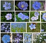 推進盆栽バスケット花の種100個ブルー亜麻の種子オーガニックは、新しく美しいブルーの花を収穫,! 小説