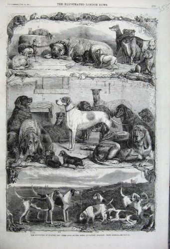 1861 Sporting Dogs Horse Repository Holborn Prize