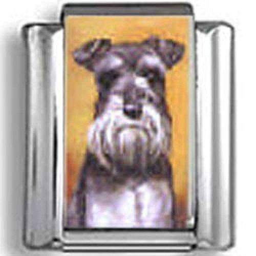 Schnauzer Dog Photo Italian Charm (Schnauzer Italian Charm compare prices)