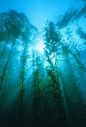 Wallmonkeys WM268165 Skyward View through an Underwater Kelp Forest Peel and Stick Wall Decals (24 in H x 16 in W)