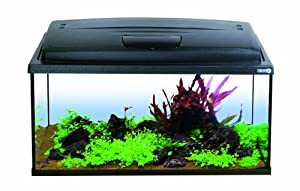 aqua szut labeo complete fish tank 80 x 35 x 40 cm co uk pet supplies