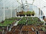 "Solexx Conservatory Greenhouse 16' X 16' X 9'6"" - 3.5mm"