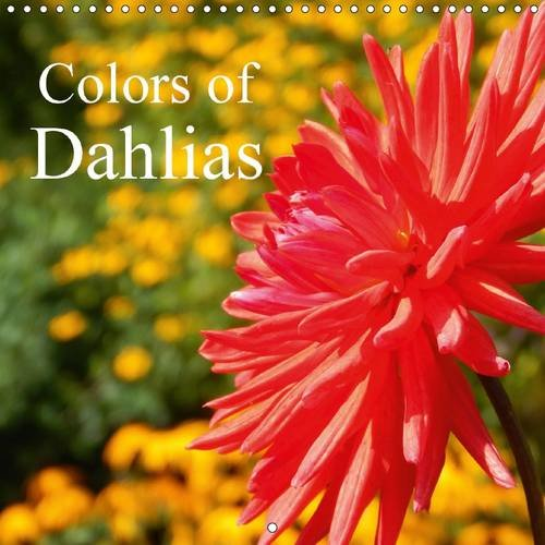 colors-of-dahlias-dahlias-delight-us-with-their-beautiful-colors-and-flower-shape