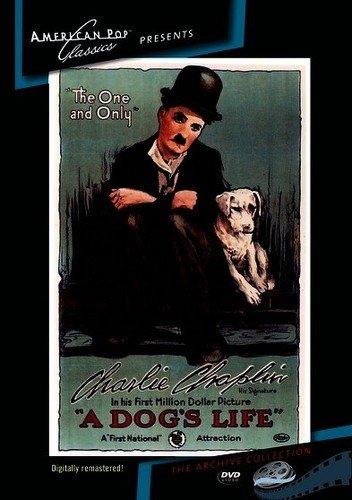 DVD : Dog's Life