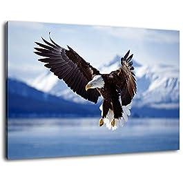 bald eagle in flight alaska Format 80x60 cm Bild auf Leinwand, XXL riesige Bilder fertig gerahmt mit Keilrahmen, Kunstdruck auf Wandbild mit Rahmen