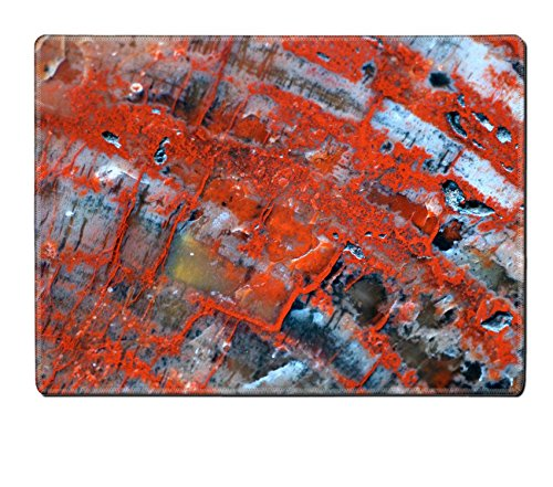 MSD Placemat Petrified Wood Natural Rubber Material Image 133032382 (Petrified Wood Tray compare prices)