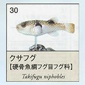 ユージン 原色図鑑シリーズ6 原色淡水魚図鑑2 クサフグ ガチャポン チョコエッグフィギュア