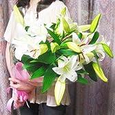 豪華白オリエンタル百合5本25輪以上の花束ギフト
