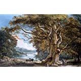 An Ancient Beech Tree, by Paul Sandby (V&A Custom Print)