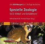 Spezielle Zoologie. Teil 2: Wirbel- o...
