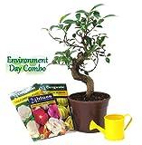 Exotic Green Environment Day Special S Shape Bonsai Dark Brown