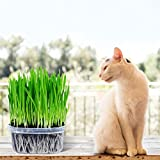 Bornbayb 3 Pack Organic Wheatgrass Cat Grass Seeds(Includes Trays, Soil, Wheat Grass Seeds)