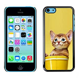 Omega Covers - Snap on Hard Back Case Cover Shell FOR Apple iPhone 5C - Cute Cat Kitten Invisible Enemy