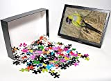 Photo Jigsaw Puzzle of Nanday Conure - hen from Ardea Wildlife Pets