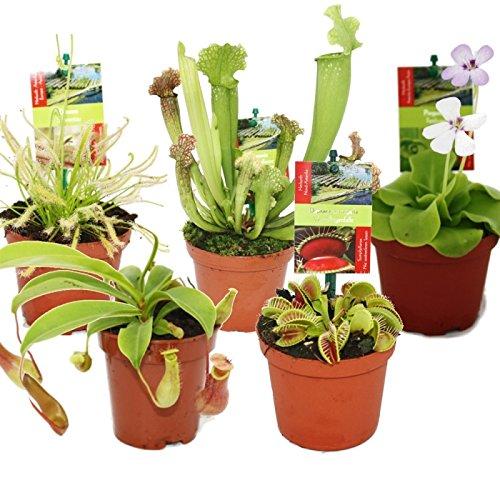 starter-set-carnivorous-plants-5-plant
