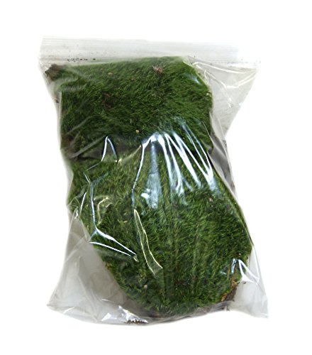 dried-mood-moss-1-gallon-bag