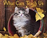 What Cats Teach Us 2014 Wall Calendar