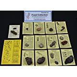Fossil Collection (13 Pc.) With Id Cards & Trilobite, Sharks Teeth, Coprolite (Fossilized Turtle Poo