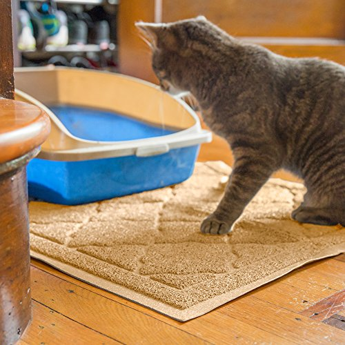 how to train your kitten to sit