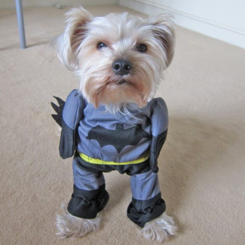 : Alfie Couture Pet Apparel - Superhero Costume Batman - Size: S