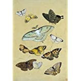 Butterflies. Japan, 19th century (V&A Custom Print)