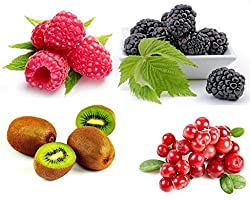 Fruit Seeds Combo - Blackberry, Raspberry, Cranberry, Kiwi Fruit Seeds by National Gardens