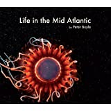 Life in the Mid Atlanticby Peter Boyle