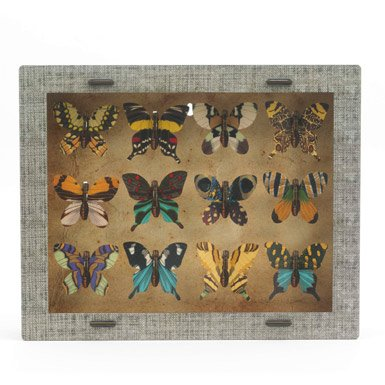 Butterfly Object Collection (x12)