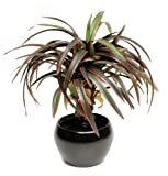 Artificial Silk Yucca in Ceramic Pot - 35cm, Red/Green