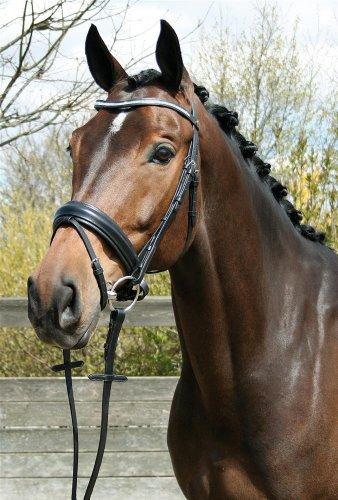 Harry's Horse Schwedische Trense Luxus crystal